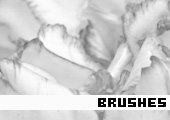 Photoshop Brushes 165 -