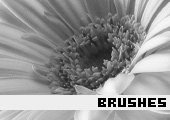 Photoshop Brushes 36 -