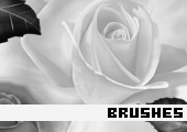 Photoshop Brushes 118 -