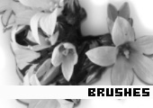 Photoshop Brushes 139 -