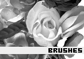 Photoshop Brushes 38 -