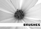 Photoshop Brushes 148 -