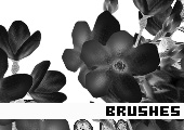 Photoshop Brushes 161 -