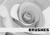 Photoshop Brushes 37 -