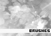 Photoshop Brushes 104 -