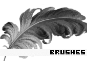 Photoshop Brushes 105 -