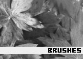 Photoshop Brushes 76 -