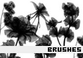 Photoshop Brushes 32 -