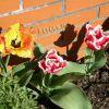 Hübsche Blume 2